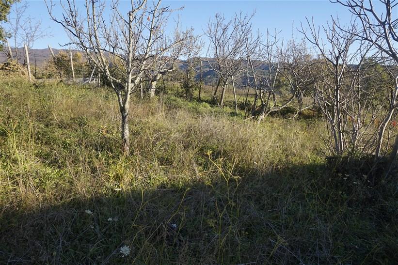 Terreno edificabile in VENDITA a Serra Pedace